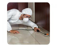 Pestico Pest Control Adelaide provides Bed Bugs Removal service Across Adelaide