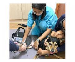 Pet Cancer, Tumor, Orthopedic, Fracture treatment Singapore