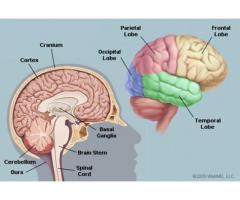 https://sites.google.com/view/cortexene-nootropic-pill/home